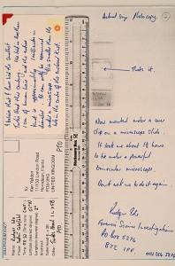 Millennium Knot Postcards (59)